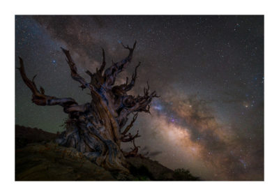 The Milky Way rising over the Ancient Bristlecone Pine Forest, California. Available as a print on my store
